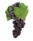 "7"" Artificial Concord Grape Cluster"